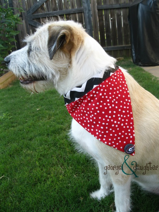georgia & daughter: DIY Dog Collar Bound Bandanas for University of Georgia