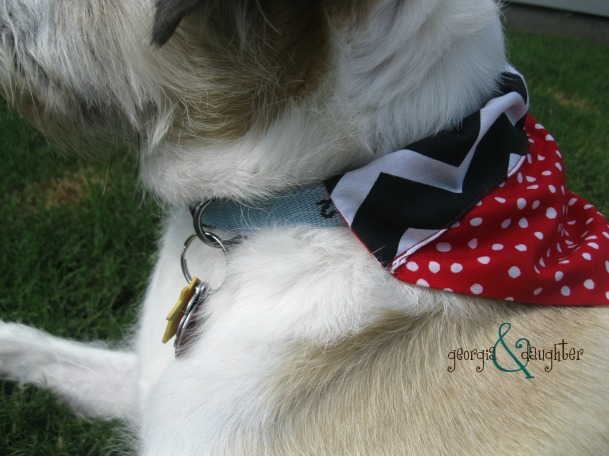georgia & daughter: DIY Dog Collar Bound Bandanas