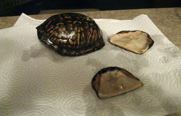 georgia & daughter: Preserving a Turtle Shell